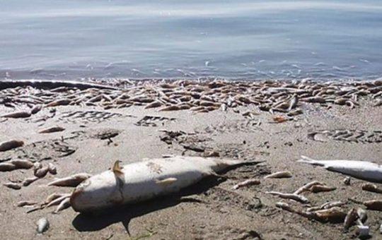 Desastre ecologico en España